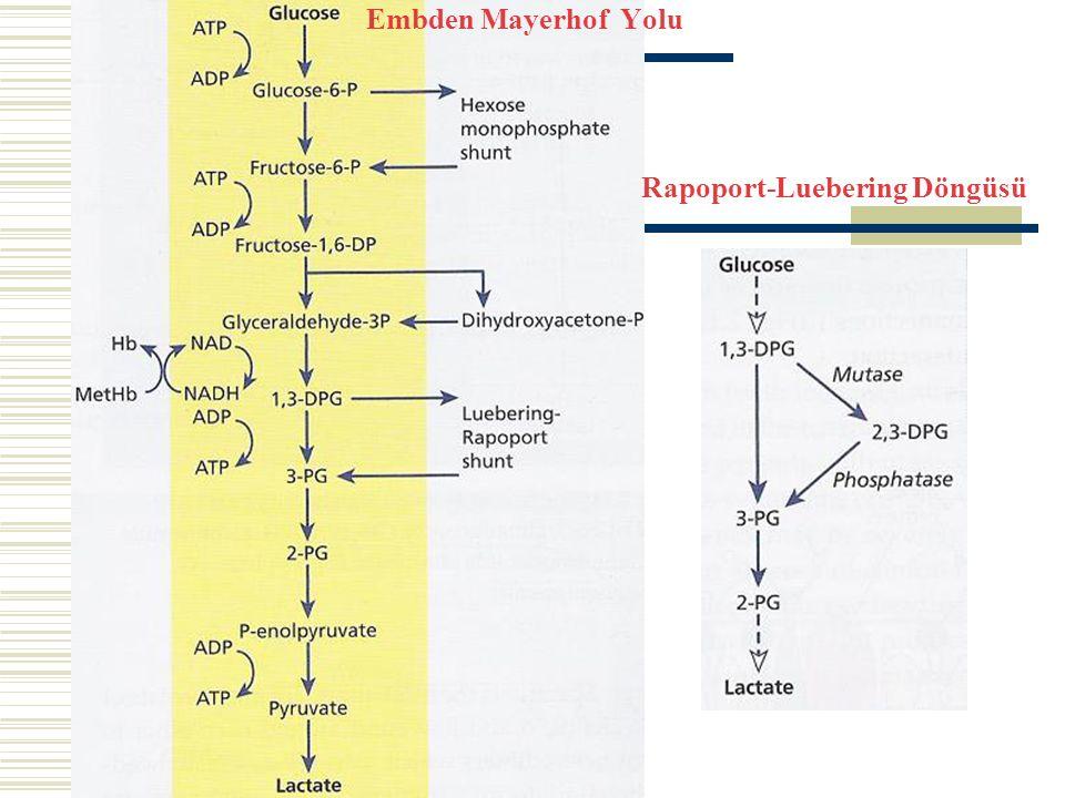 Embden Mayerhof Yolu Rapoport-Luebering Döngüsü