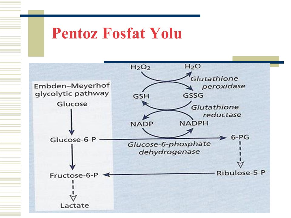 Pentoz Fosfat Yolu