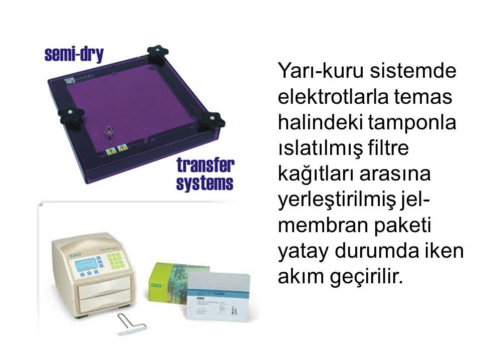 Yarı-kuru sistemde elektrotlarla temas halindeki tamponla ıslatılmış filtre kağıtları arasına yerleştirilmiş jel-membran paketi yatay durumda iken akım geçirilir.