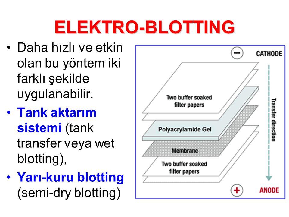ELEKTRO-BLOTTING Daha hızlı ve etkin olan bu yöntem iki farklı şekilde uygulanabilir. Tank aktarım sistemi (tank transfer veya wet blotting),