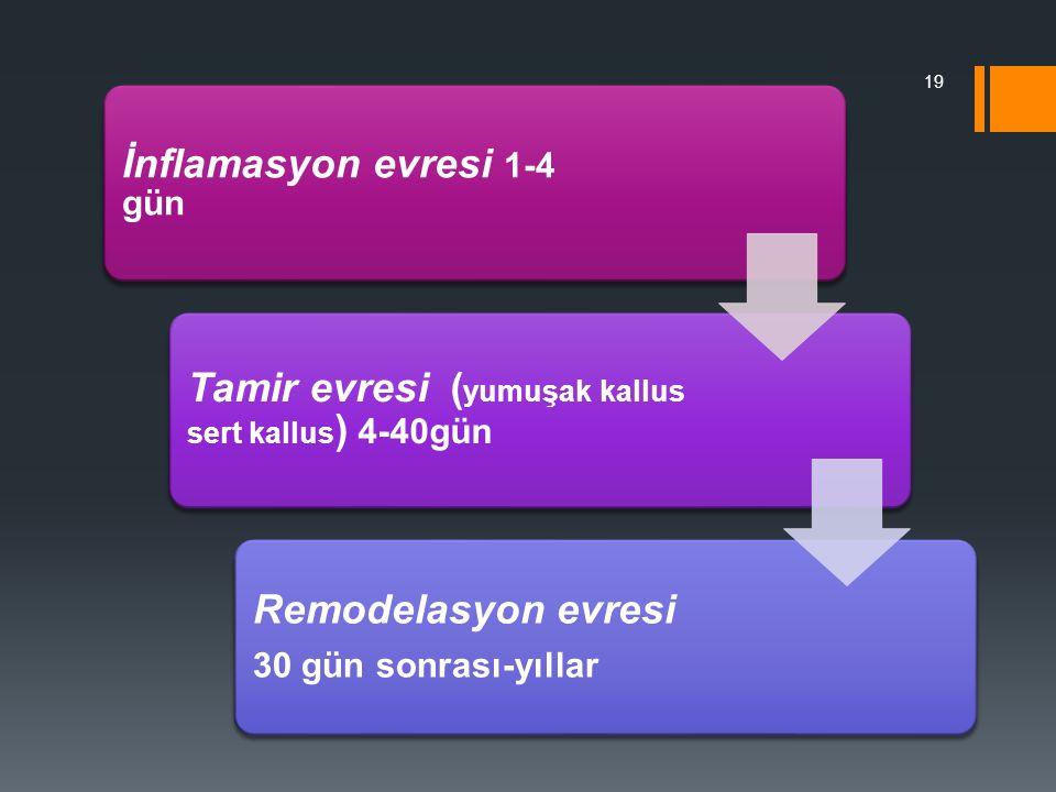 İnflamasyon evresi 1-4 gün