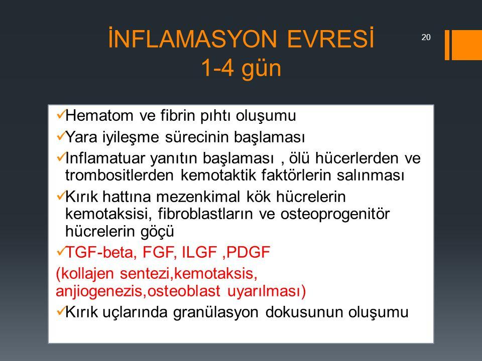 İNFLAMASYON EVRESİ 1-4 gün