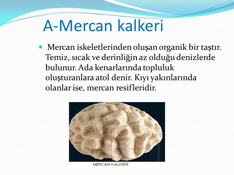 A-Mercan kalkeri