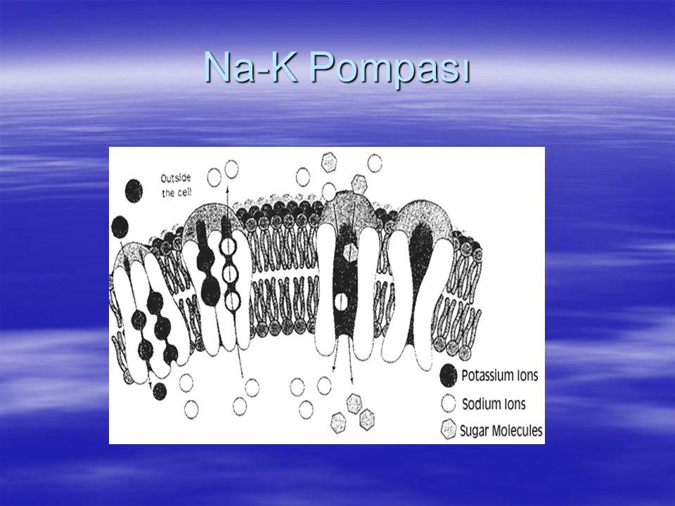 Na-K Pompası