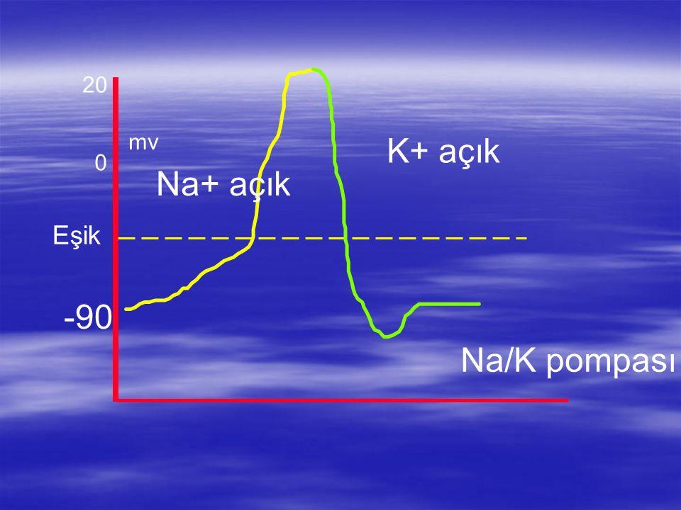 20 mv K+ açık Na+ açık Eşik -90 Na/K pompası