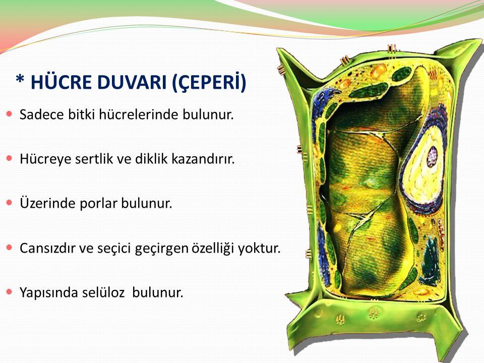 * HÜCRE DUVARI (ÇEPERİ)