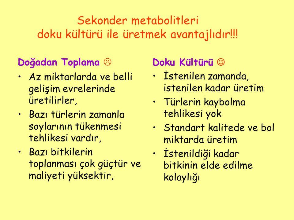 Sekonder metabolitleri doku kültürü ile üretmek avantajlıdır!!!