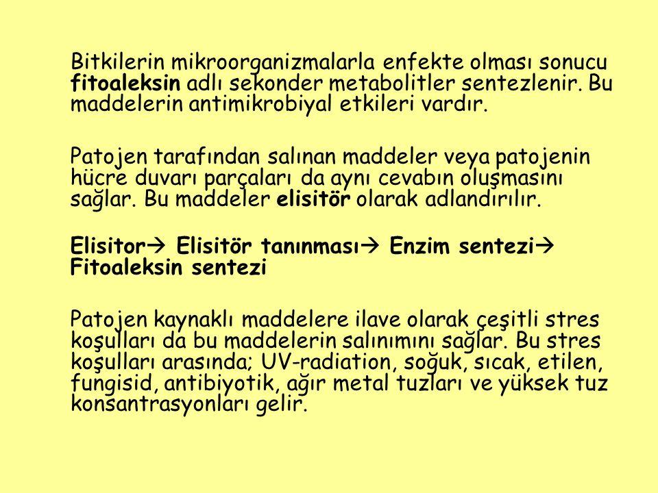 Elisitor Elisitör tanınması Enzim sentezi Fitoaleksin sentezi
