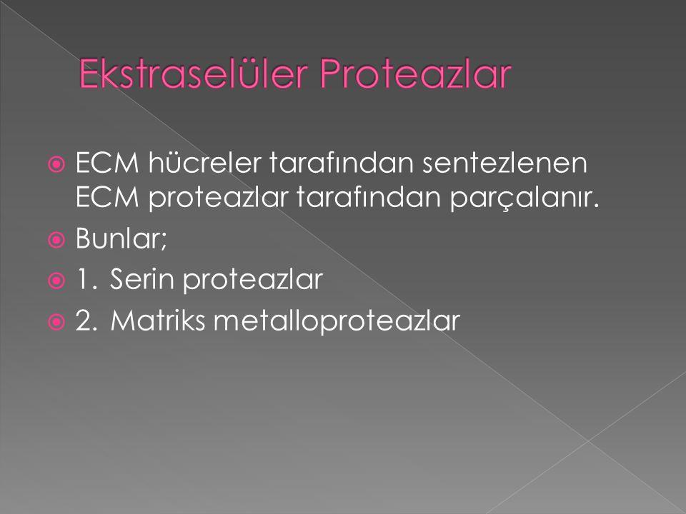 Ekstraselüler Proteazlar