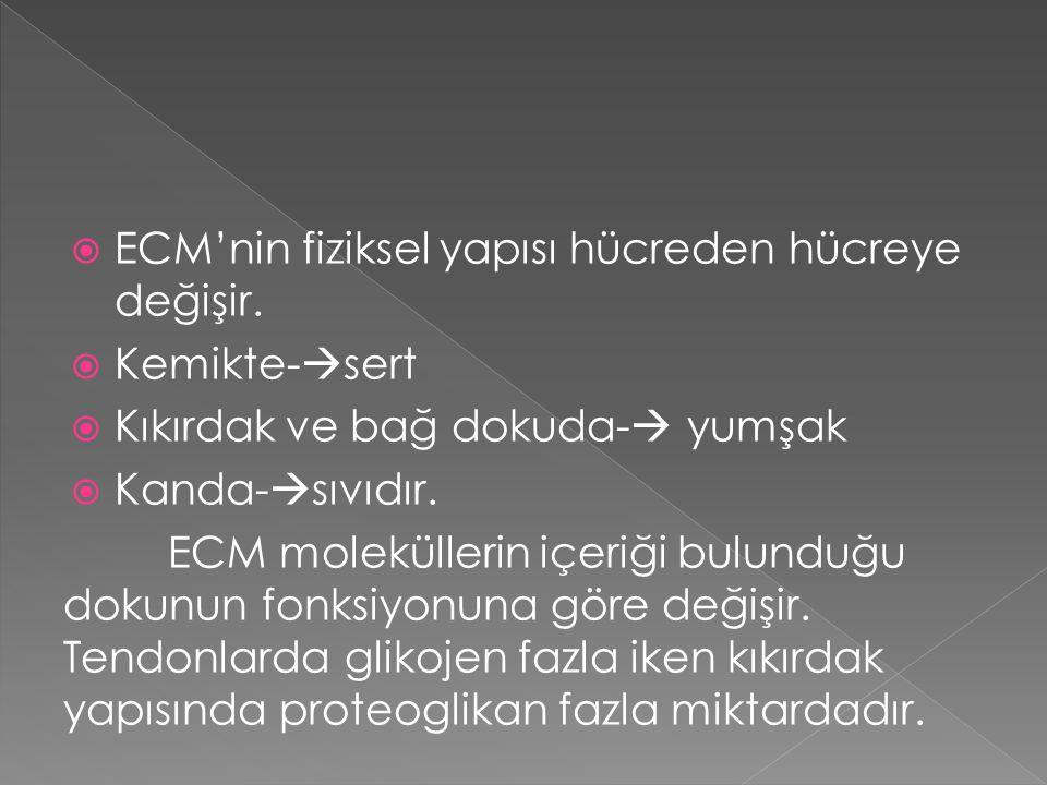 ECM'nin fiziksel yapısı hücreden hücreye değişir.