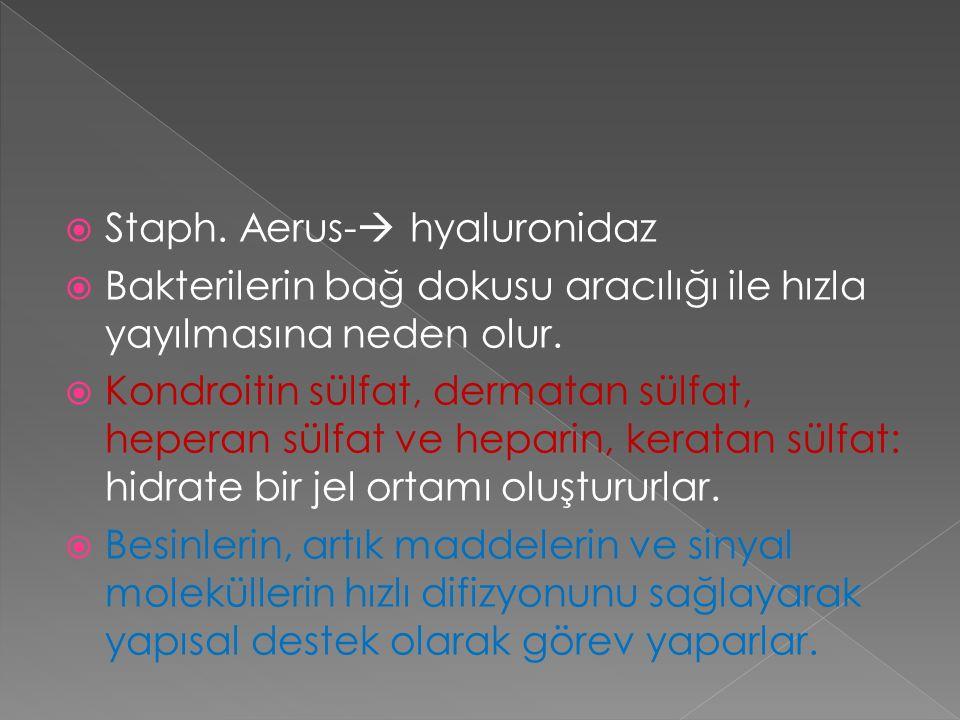 Staph. Aerus- hyaluronidaz