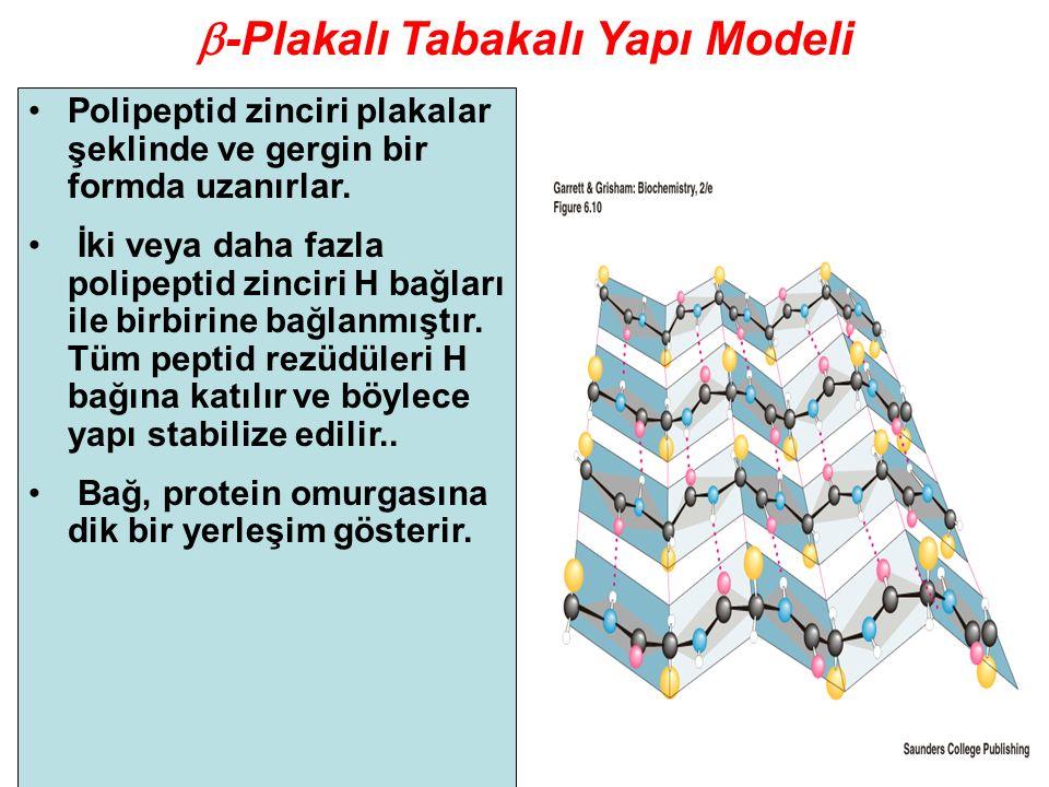 b-Plakalı Tabakalı Yapı Modeli