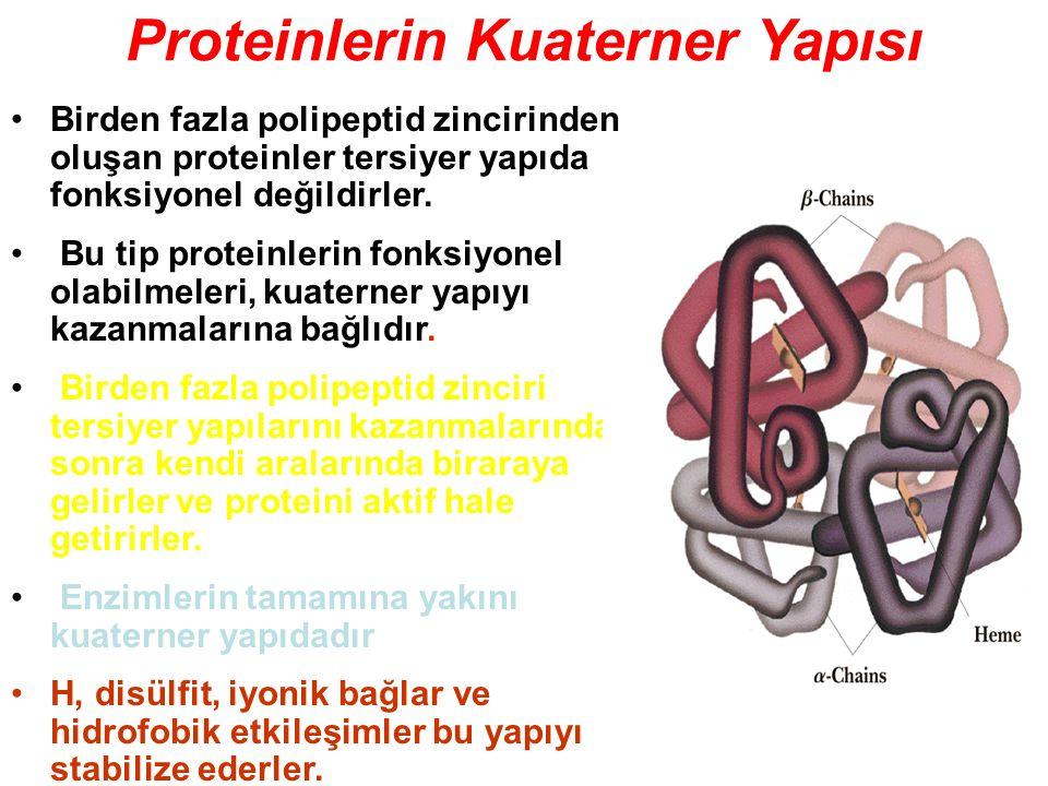 Proteinlerin Kuaterner Yapısı