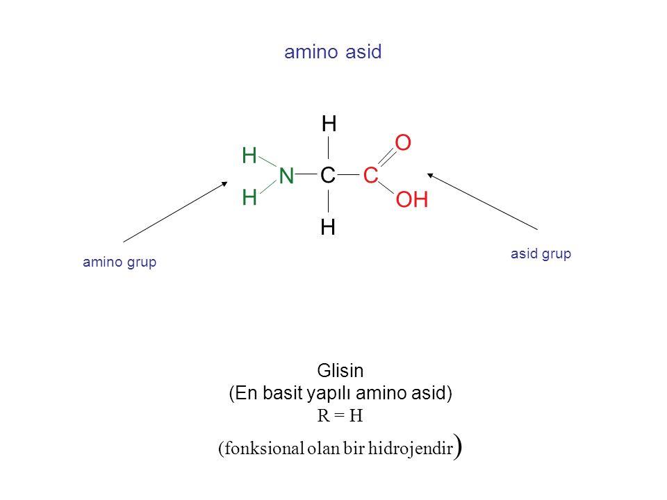 . H O H N C C H OH H amino asid Glisin (En basit yapılı amino asid)