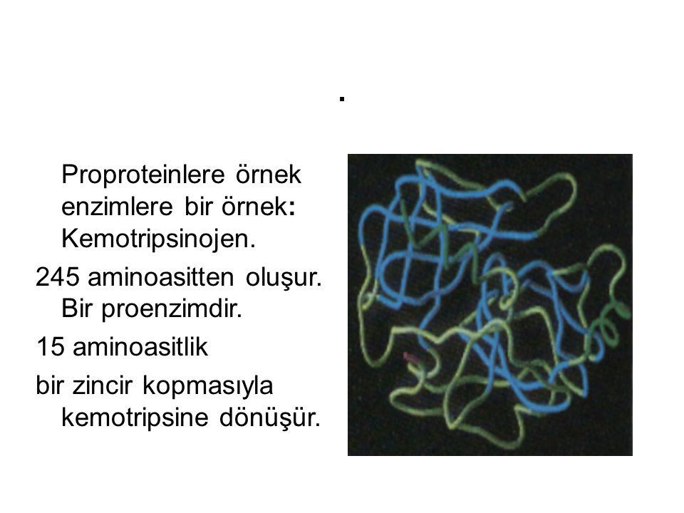 . Proproteinlere örnek enzimlere bir örnek: Kemotripsinojen.