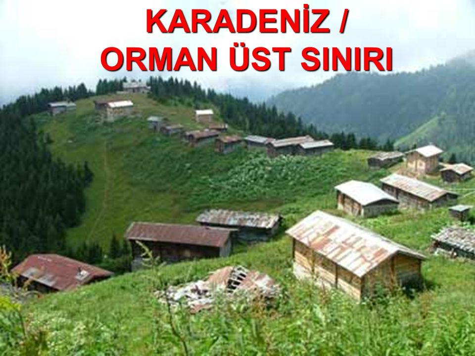 KARADENİZ / ORMAN ÜST SINIRI