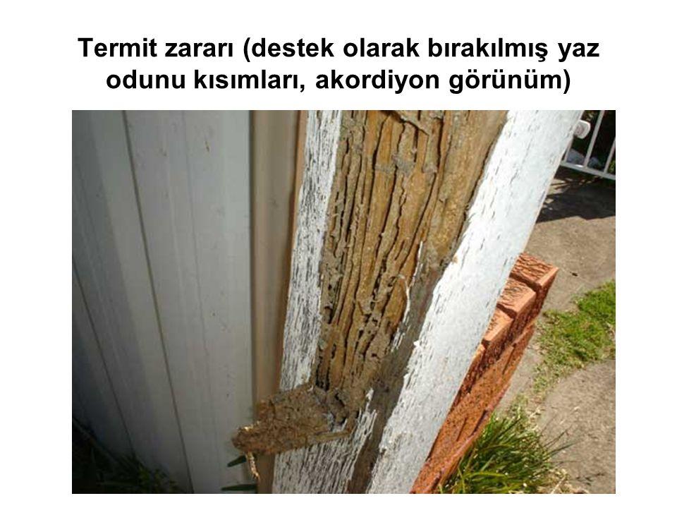 Termit zararı (destek olarak bırakılmış yaz odunu kısımları, akordiyon görünüm)