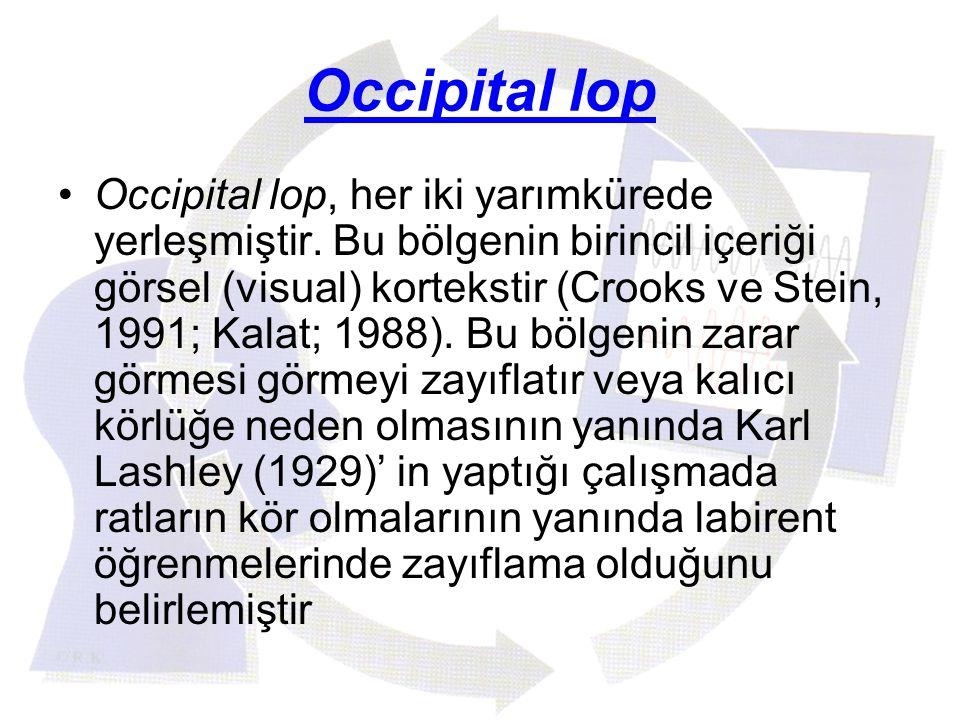 Occipital lop