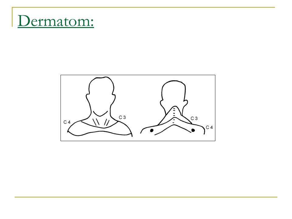 Dermatom: