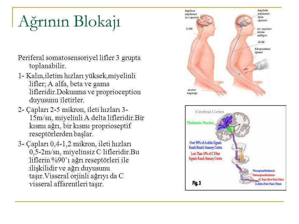 Ağrının Blokajı Periferal somatosensoriyel lifler 3 grupta toplanabilir.