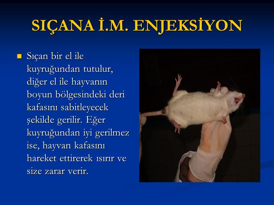 SIÇANA İ.M. ENJEKSİYON