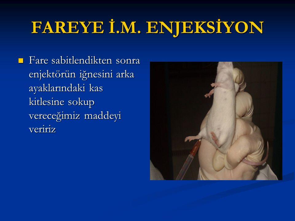 FAREYE İ.M.