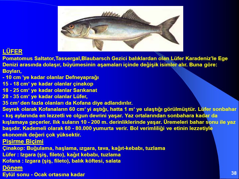 LÜFER Pomatomus Saltator,Tassergal,Blaubarsch Gezici balıklardan olan Lüfer Karadeniz le Ege Denizi arasında dolaşır, büyümesinin aşamaları içinde değişik isimler alır.