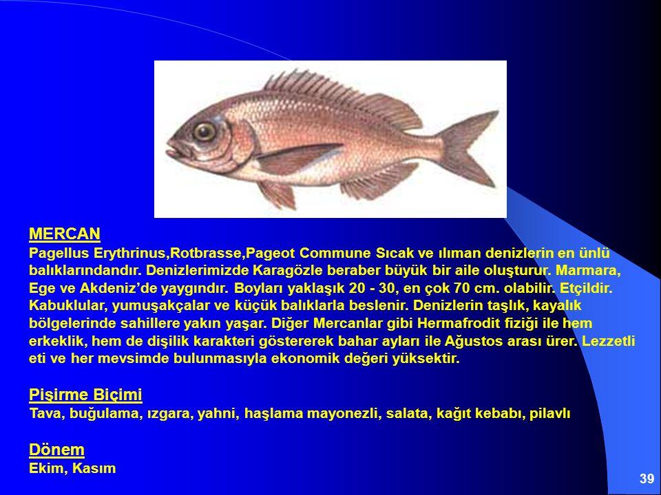 MERCAN Pagellus Erythrinus,Rotbrasse,Pageot Commune Sıcak ve ılıman denizlerin en ünlü balıklarındandır.