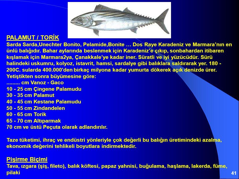 PALAMUT / TORİK Sarda Sarda,Unechter Bonito, Pelamide,Bonite … Dos Raye Karadeniz ve Marmara'nın en ünlü balığıdır.