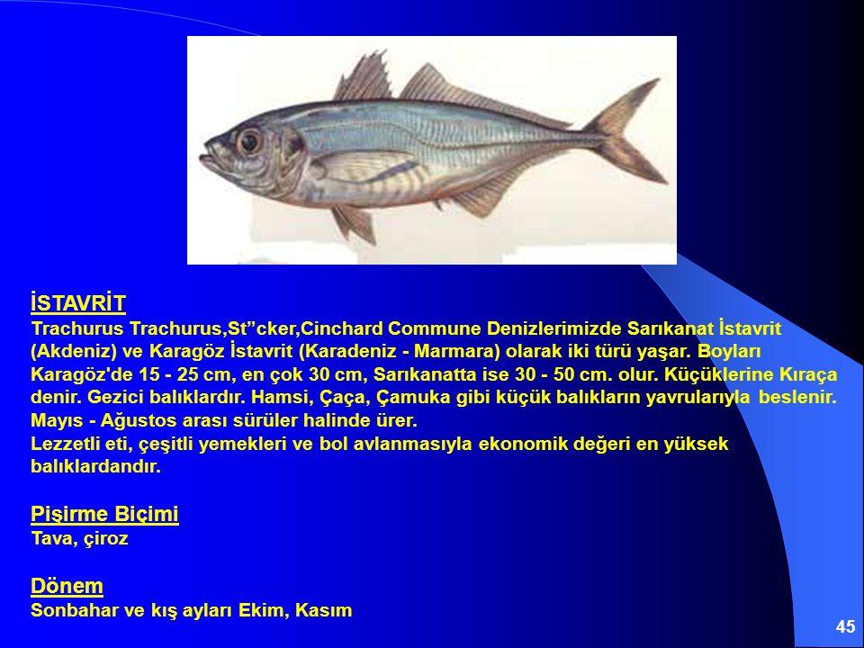 İSTAVRİT Trachurus Trachurus,St cker,Cinchard Commune Denizlerimizde Sarıkanat İstavrit (Akdeniz) ve Karagöz İstavrit (Karadeniz - Marmara) olarak iki türü yaşar.