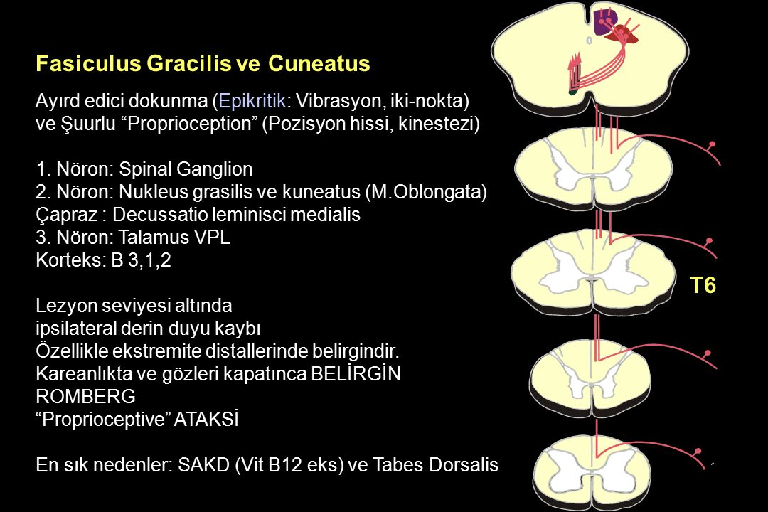 Fasiculus Gracilis ve Cuneatus