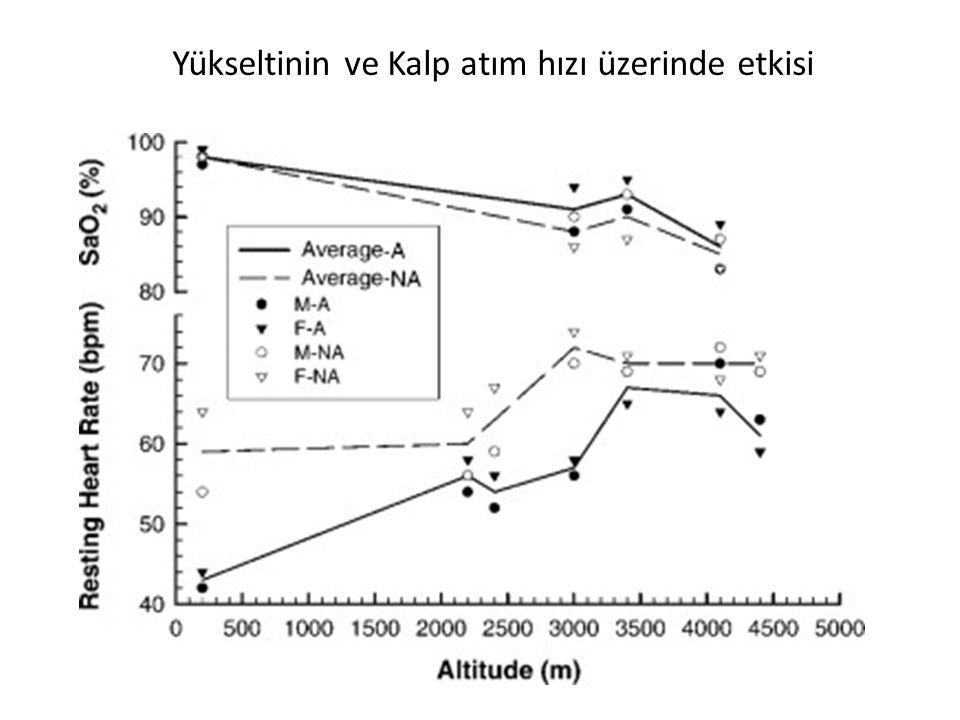 Yükseltinin ve Kalp atım hızı üzerinde etkisi