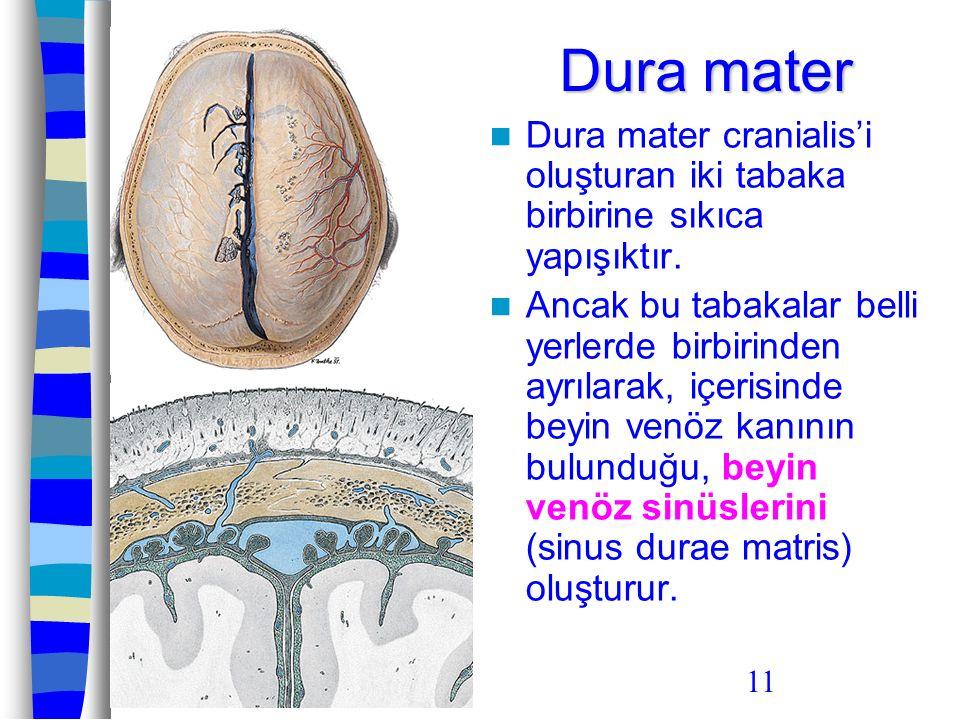 Dura mater Dura mater cranialis'i oluşturan iki tabaka birbirine sıkıca yapışıktır.