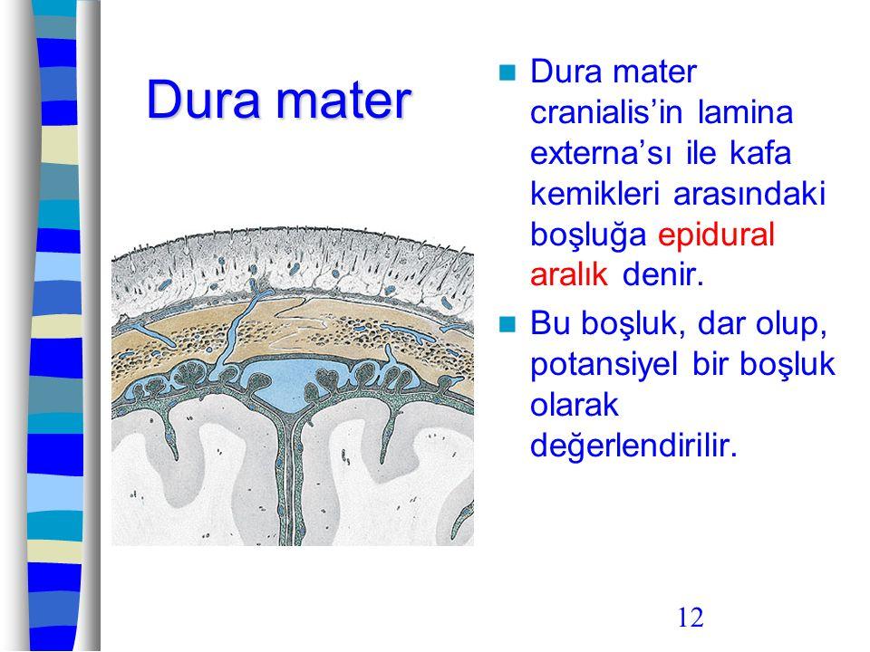 Dura mater Dura mater cranialis'in lamina externa'sı ile kafa kemikleri arasındaki boşluğa epidural aralık denir.