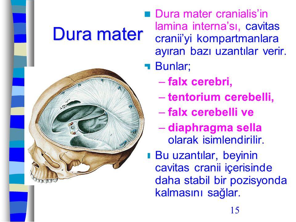 Dura mater cranialis'in lamina interna'sı, cavitas cranii'yi kompartmanlara ayıran bazı uzantılar verir.