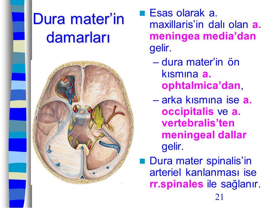 Dura mater'in damarları