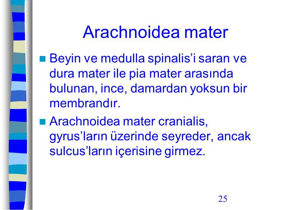 Arachnoidea mater Beyin ve medulla spinalis'i saran ve dura mater ile pia mater arasında bulunan, ince, damardan yoksun bir membrandır.