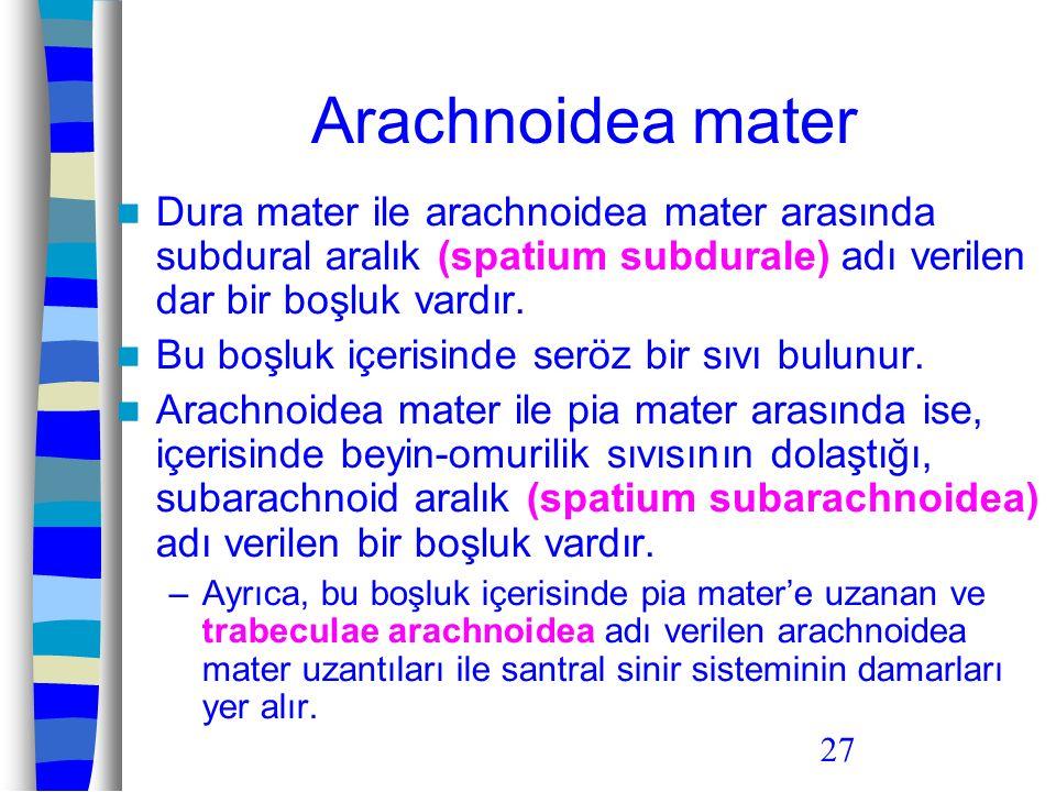 Arachnoidea mater Dura mater ile arachnoidea mater arasında subdural aralık (spatium subdurale) adı verilen dar bir boşluk vardır.