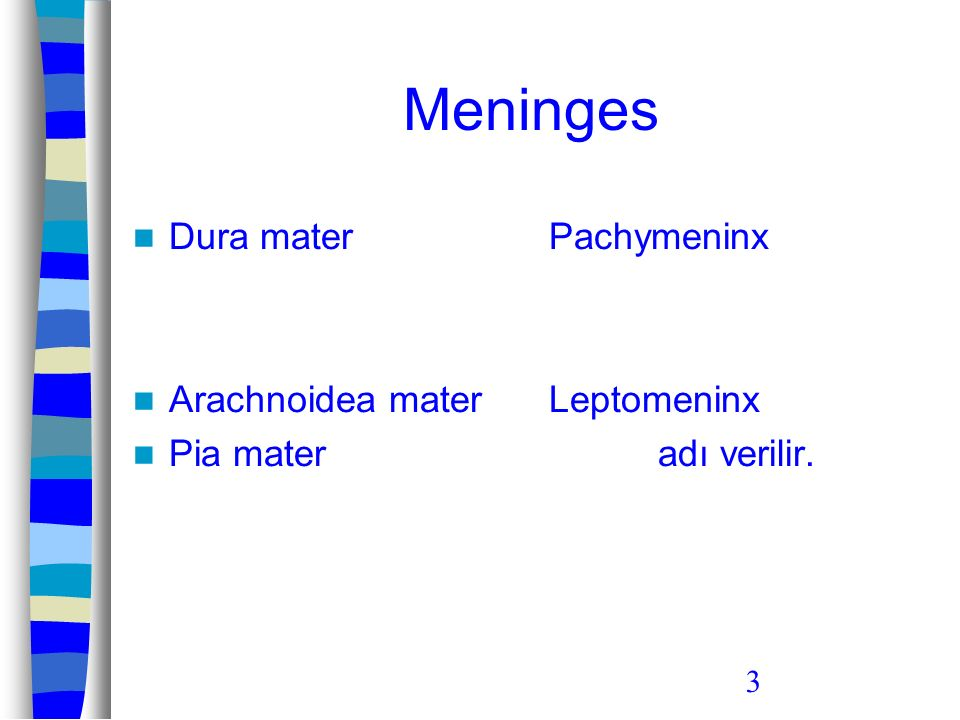 Meninges Dura mater Arachnoidea mater Pia mater Pachymeninx