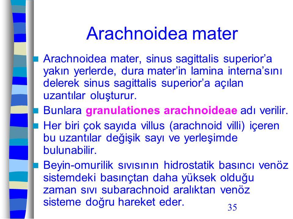 Arachnoidea mater