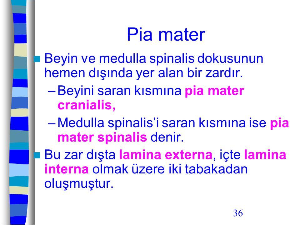 Pia mater Beyin ve medulla spinalis dokusunun hemen dışında yer alan bir zardır. Beyini saran kısmına pia mater cranialis,