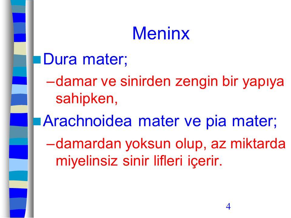 Meninx Dura mater; Arachnoidea mater ve pia mater;