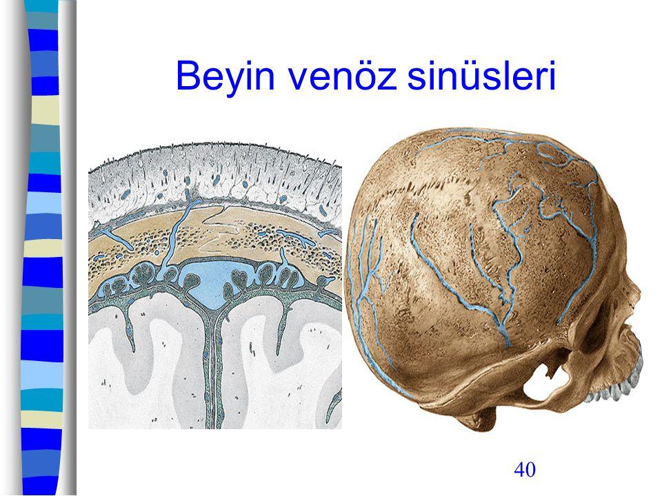 Beyin venöz sinüsleri