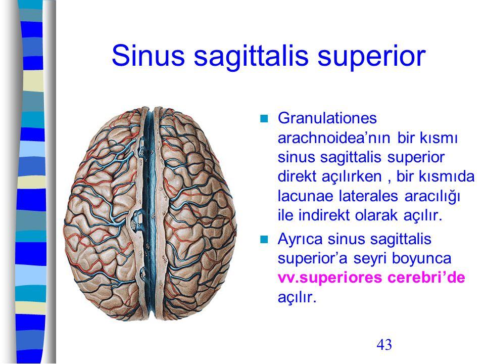 Sinus sagittalis superior
