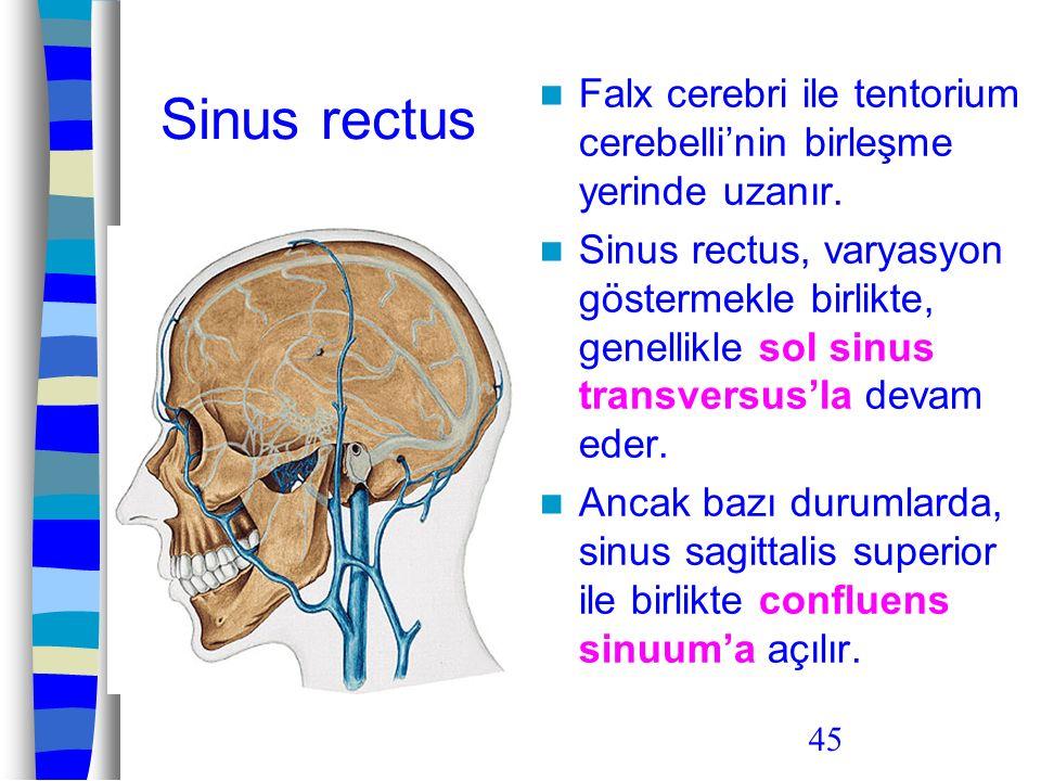 Sinus rectus Falx cerebri ile tentorium cerebelli'nin birleşme yerinde uzanır.