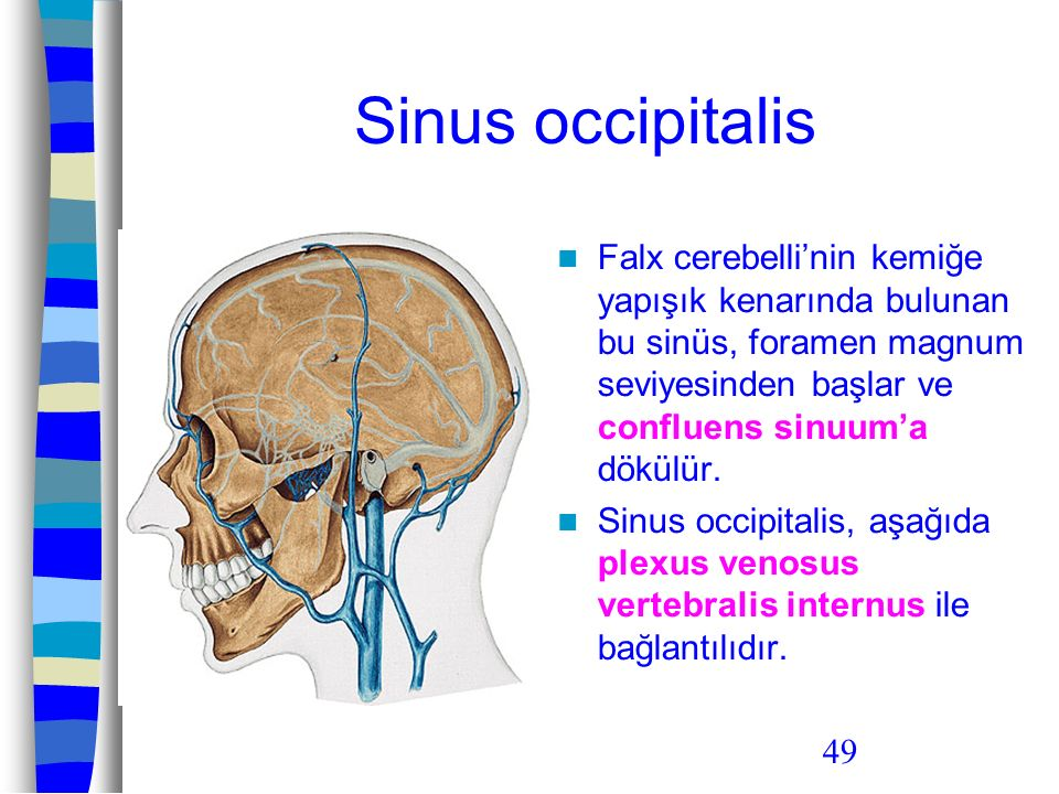 Sinus occipitalis