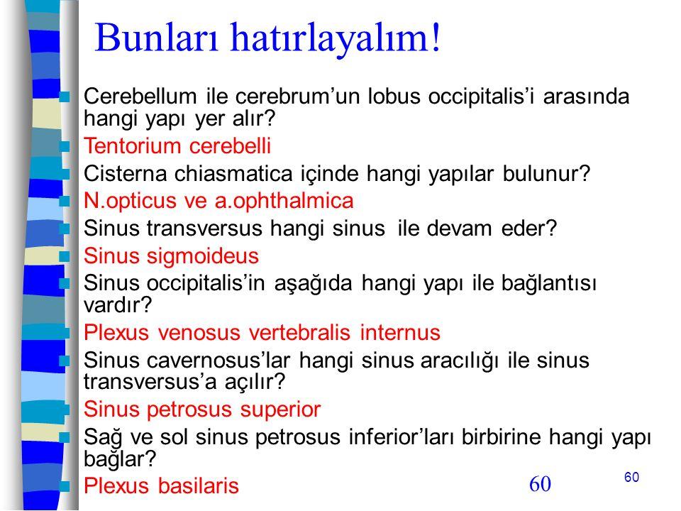 Bunları hatırlayalım! Cerebellum ile cerebrum'un lobus occipitalis'i arasında hangi yapı yer alır