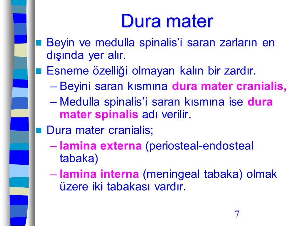 Dura mater Beyin ve medulla spinalis'i saran zarların en dışında yer alır. Esneme özelliği olmayan kalın bir zardır.