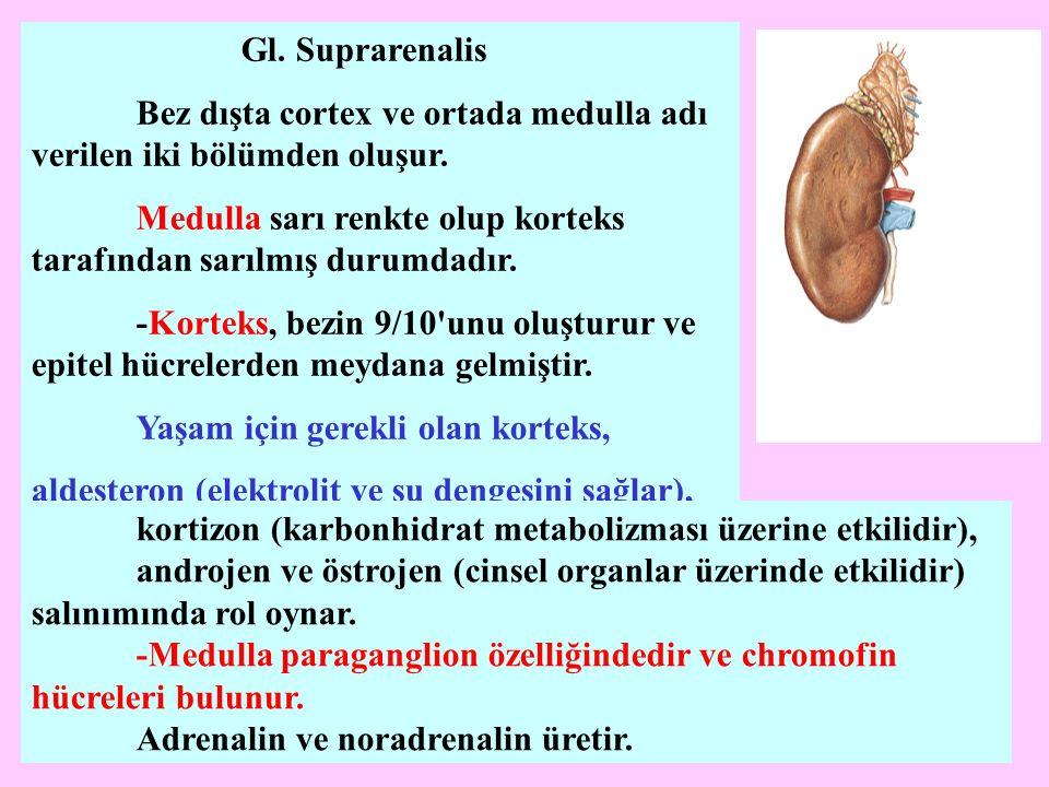 Gl. Suprarenalis Bez dışta cortex ve ortada medulla adı verilen iki bölümden oluşur.