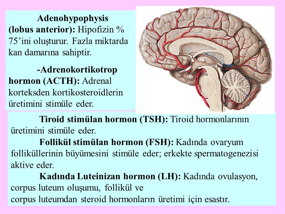 corpus luteumdan steroid hormonların üretimi için esastır.